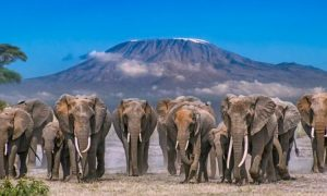 Top 5 Amboseli Lodges for Luxurious Tourist Accommodation
