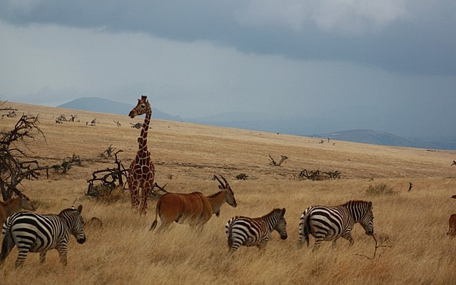 Conservancies to Visit in Kenya
