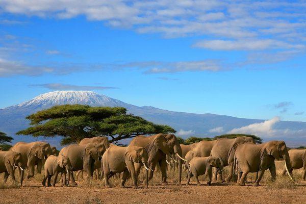2 Nights 3 Days Amboseli 3