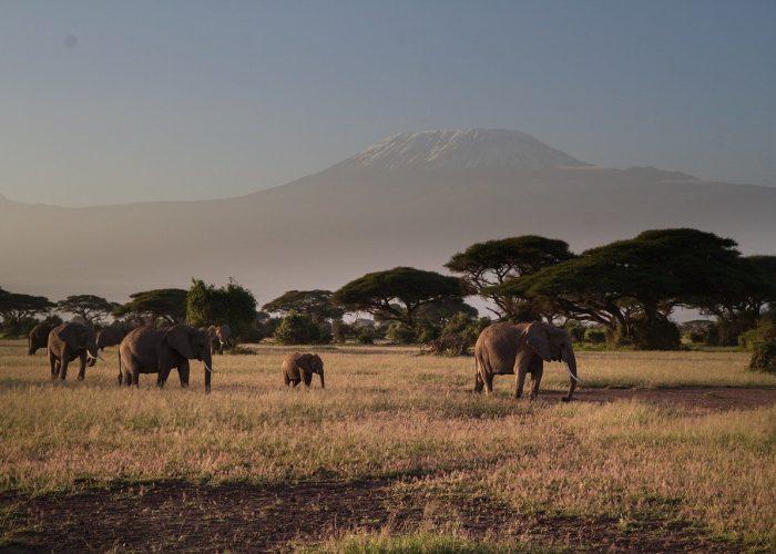Amboseli 2