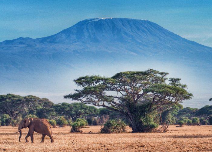 3 day tsavo and amboseli safari